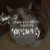 越前市でのびのびとした猫たちに会えるお寺・猫寺こと御誕生寺