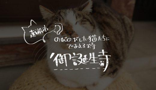 越前市でのびのびとした猫たちに会えるお寺・御誕生寺